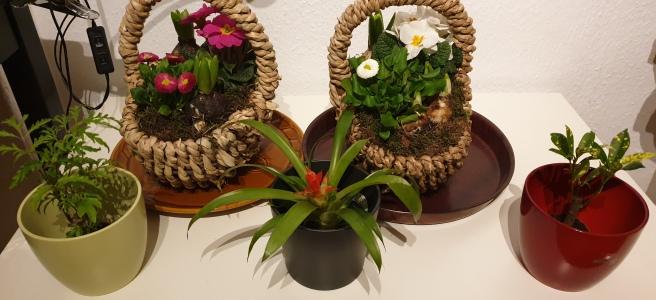 Pflanzen von Andreas